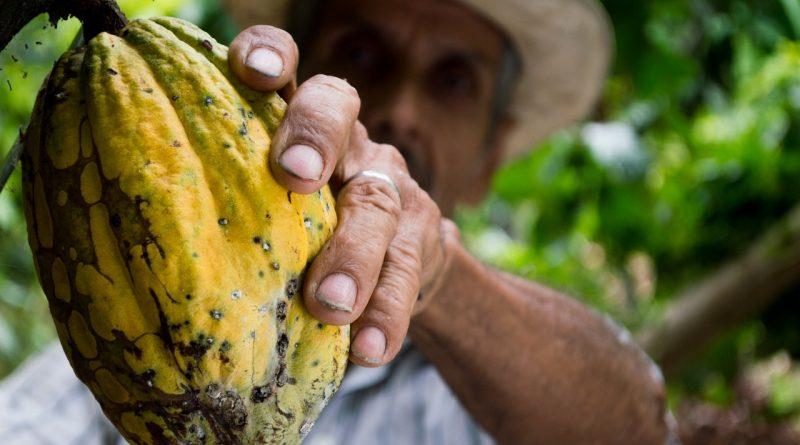 Masło kakaowe – jak ten surowiec kosmetyczny wpływa naurodę?